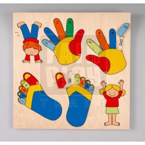 Kéz-láb számolás